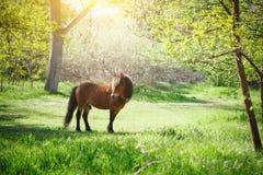 De mooie poney loopt en is geweid in het park royalty-vrije stock fotografie