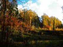 De mooie Poolse gouden herfst royalty-vrije stock afbeeldingen