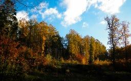 De mooie Poolse gouden herfst royalty-vrije stock afbeelding