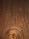 De mooie rekening van een boom Stock Afbeeldingen