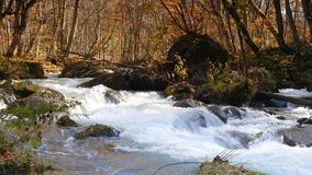 De mooie rivier die van de Oirasekloof het de herfstseizoen, Japan druing stock videobeelden