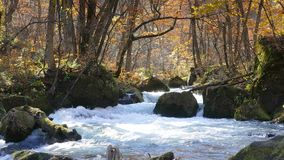 De mooie rivier die van de Oirasekloof het de herfstseizoen, Japan druing stock video