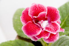De mooie rode bloem royalty-vrije stock afbeeldingen