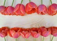 De mooie rode en roze tulpen worden opgemaakt in twee rijen op een houten oppervlakte stock foto's
