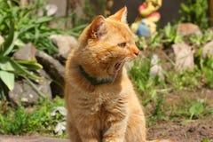 De mooie rode kat zingt op de straat royalty-vrije stock fotografie