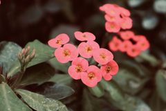 De mooie rode roze oranjegele bloemen met achtergrond sluiten bloem omhoog bloeiende wilde bloem royalty-vrije stock afbeeldingen