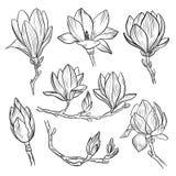 De mooie Roze Bloemen van de Magnolia De hand getrokken elementen van de de lente tot bloei komende die installatie op witte acht Royalty-vrije Stock Afbeeldingen