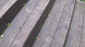 De mooie roze close-up van de floxbloeiwijze HD video statric camera stock videobeelden