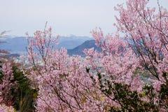 De mooie roze kers komt op de heuvel, Hanamiyama-Park, Fukushima, Tohoku, Japan tot bloei Met Fukushima City en MT Azuma in de af stock fotografie