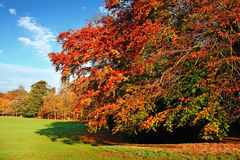 De mooie Scène van de Herfst stock foto