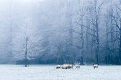 De mooie scène van het de winterlandschap Stock Fotografie