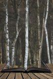 De mooie scène van de het landschaps fijne kunst van Autumn Fall Winter bos bos in pagina's van open boek, verhaal het vertellen  stock foto