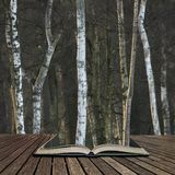 De mooie scène van de het landschaps fijne kunst van Autumn Fall Winter bos bos in pagina's van open boek, verhaal het vertellen  stock afbeeldingen
