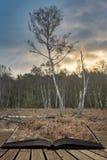 De mooie scène van de het landschaps fijne kunst van Autumn Fall Winter bos bos in pagina's van open boek, verhaal het vertellen  royalty-vrije stock afbeelding