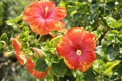 De mooie schoonheid van bloem verse bloemen van aard groen blad stock foto's