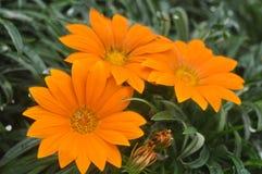 De mooie schoonheid van bloemen verse bloemen van aard stock foto's