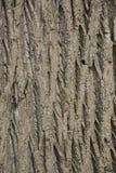 De mooie schors van boom met kreuken en groen mos royalty-vrije stock afbeeldingen