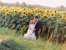 De mooie sensuele bruid en de bruidegom van het huwelijkspaar omhelzen op zonnebloemgebied royalty-vrije stock afbeeldingen