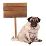 De mooie slimme pug zitting van de puppyhond neer naast leeg houten die teken op pool, op witte achtergrond wordt geïsoleerd Royalty-vrije Stock Foto