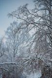 De mooie sneeuw behandelde lange bomen in een de winterbos stock fotografie