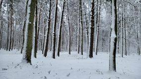 De mooie sneeuw behandelde wild bos, aardreserve, de winterlandschap, mening stock footage