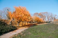 De mooie steeg van het de herfstpark met gele bladeren op bomenbac royalty-vrije stock foto