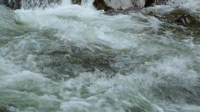 De mooie stroom van de rivierstroom snel in bos in de bergen van de Kaukasus, Georgië stock video