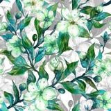 De mooie takjes van de fruitboom in bloei Witte en groene bloemen met overzichten op witte achtergrond naadloos de lente bloemenp stock illustratie