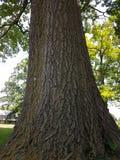 De Mooie Textuur van boomtrunck in Park en thuis tuin stock afbeelding