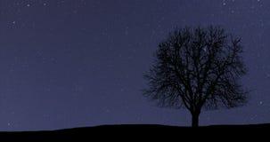 De mooie tijdspanne van de astronomietijd Melkweg Eenzame boom stock video