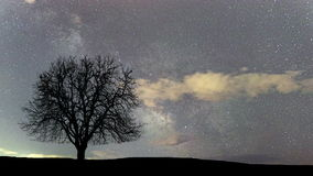 De mooie tijdspanne van de astronomietijd Melkweg Eenzame boom stock videobeelden