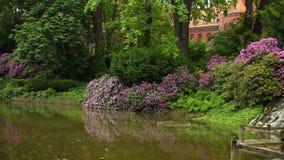 De mooie tropische installaties, struiken, bomen, bloemen groeien in botanische tuin stock videobeelden