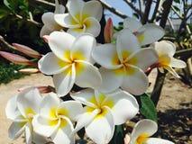 De mooie van de de bloemtuin van de fotografielevensstijl natuurlijke achtergrond Stock Fotografie