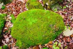 de mooie verbazende die close-up detailleerde mening van een steen met heldergroen mos in de herfsthout wordt behandeld royalty-vrije stock fotografie