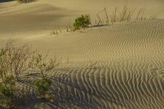 De mooie Vlakke Duinen van Mesquite Stock Afbeeldingen