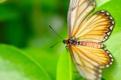 De mooie vlinder Stock Afbeeldingen