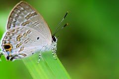 De mooie vlinder Royalty-vrije Stock Afbeeldingen