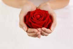 De mooie vrouwenhanden met rood namen toe Royalty-vrije Stock Afbeeldingen