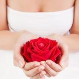 De mooie vrouwenhanden met rood namen toe Stock Afbeeldingen