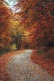 De mooie weg van de de herfst bosberg Royalty-vrije Stock Foto