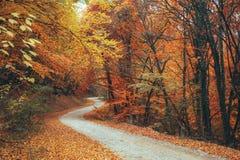 De mooie weg van de de herfst bosberg Stock Afbeelding