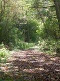 De mooie weg van het land met de lichtgroene bladerenherfst Stock Afbeelding