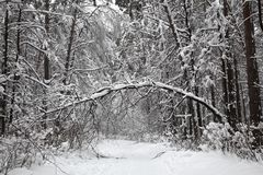De mooie de winter bos Snow-covered weg in het bos de boom boog onder het gewicht van sneeuw Royalty-vrije Stock Fotografie