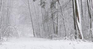 De mooie Winter Sneeuw Vergankelijk Forest During Snowy Snowstorm Day stock videobeelden
