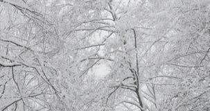 De mooie Winter Sneeuw Vergankelijk Forest During Snowy Snowstorm Day stock video