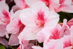 De mooie witte bloemen sluiten omhoog Stock Fotografie