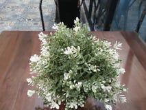 De mooie witte bloemen worden gezien verstrekkend ontspanning stock fotografie