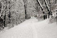 De mooie witte winter in bos met takken in sneeuw Stock Foto