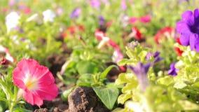 De mooie de zomerbloemen bewegen zich in de wind stock videobeelden