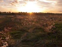 De mooie zon van de zon vastgestelde hemel over wazig gras bruin gebied vooraan Stock Foto